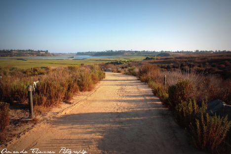 wetlands 038