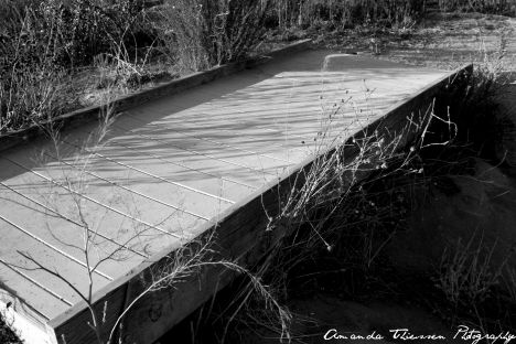 wetlands 088