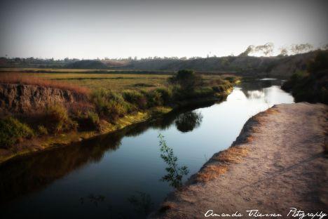 wetlands 099