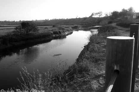 wetlands 116