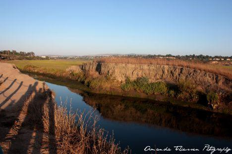 wetlands 121