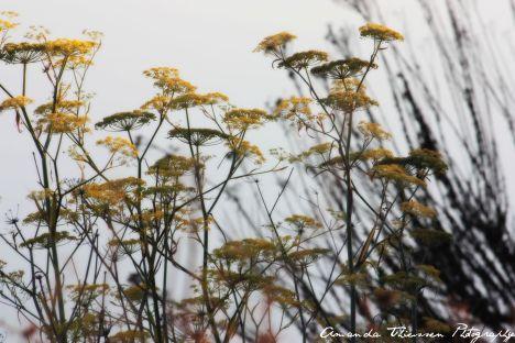 wetlands 123