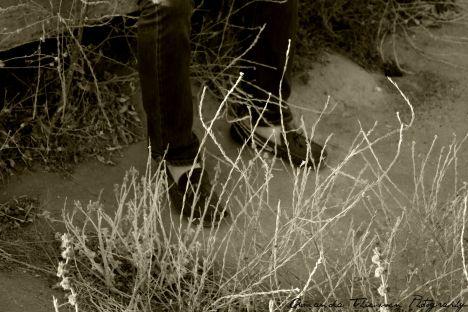 wetlands 138